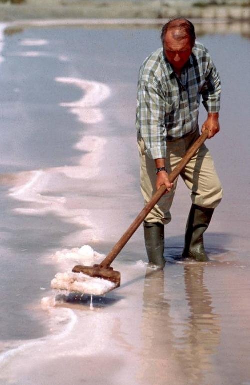 Cueillette de la fleur de sel © Salins du Midi